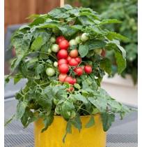 Seeds - Red Cherry Tomato