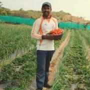 Why eat organic strawberries ?