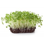 Micro greens - 6 Health benefits and unique ways to eat them!