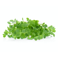 Micro Greens - Green Cabbage (50gms, Harvested)