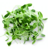 Micro Greens - Fenugreek / Methi (50gms, Harvested)