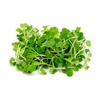 Micro Greens - Pak Choi (50gms, Harvested)